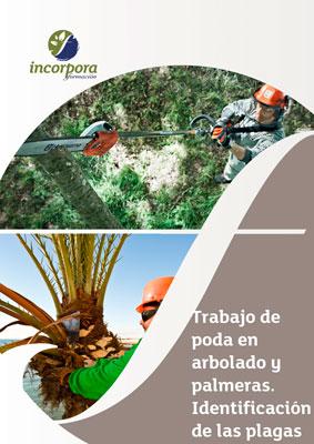 Trabajo de poda en arbolado y palmeras. Identificación de las plagas más comunes