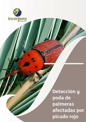 Detección y poda de palmeras afectadas por Picudo Rojo